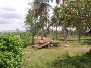 Filipino Farm